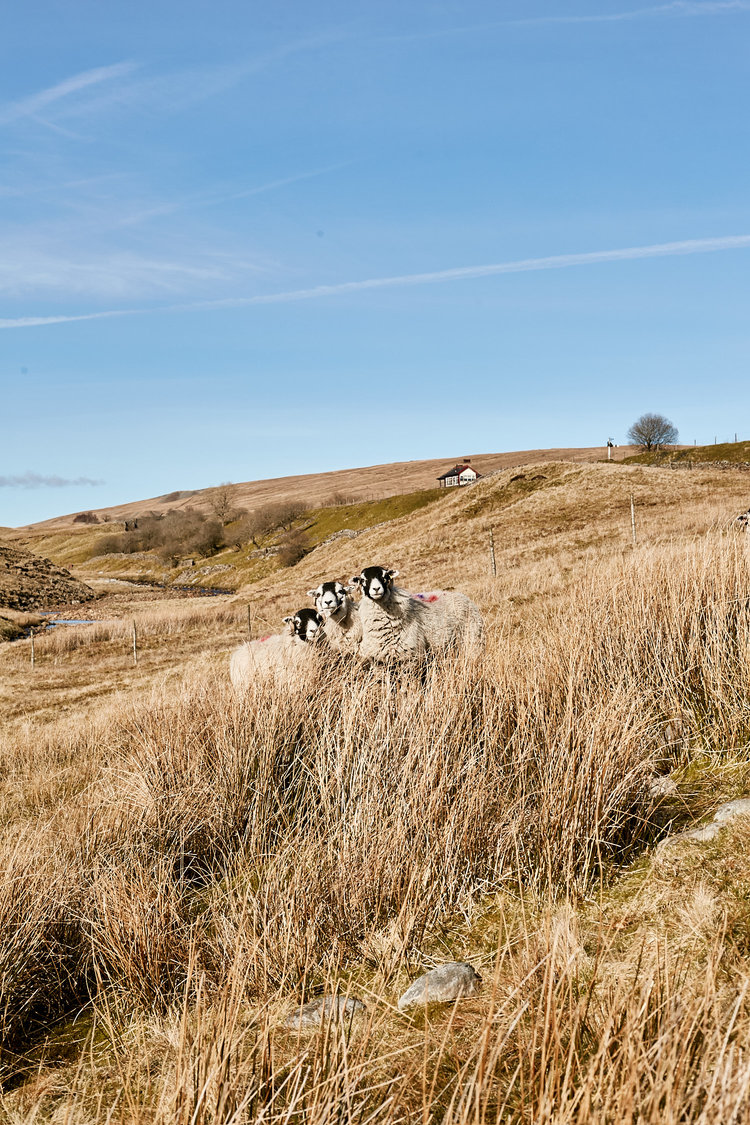 Yorkshire+Dales+-+Amber-Rose+Photography+400