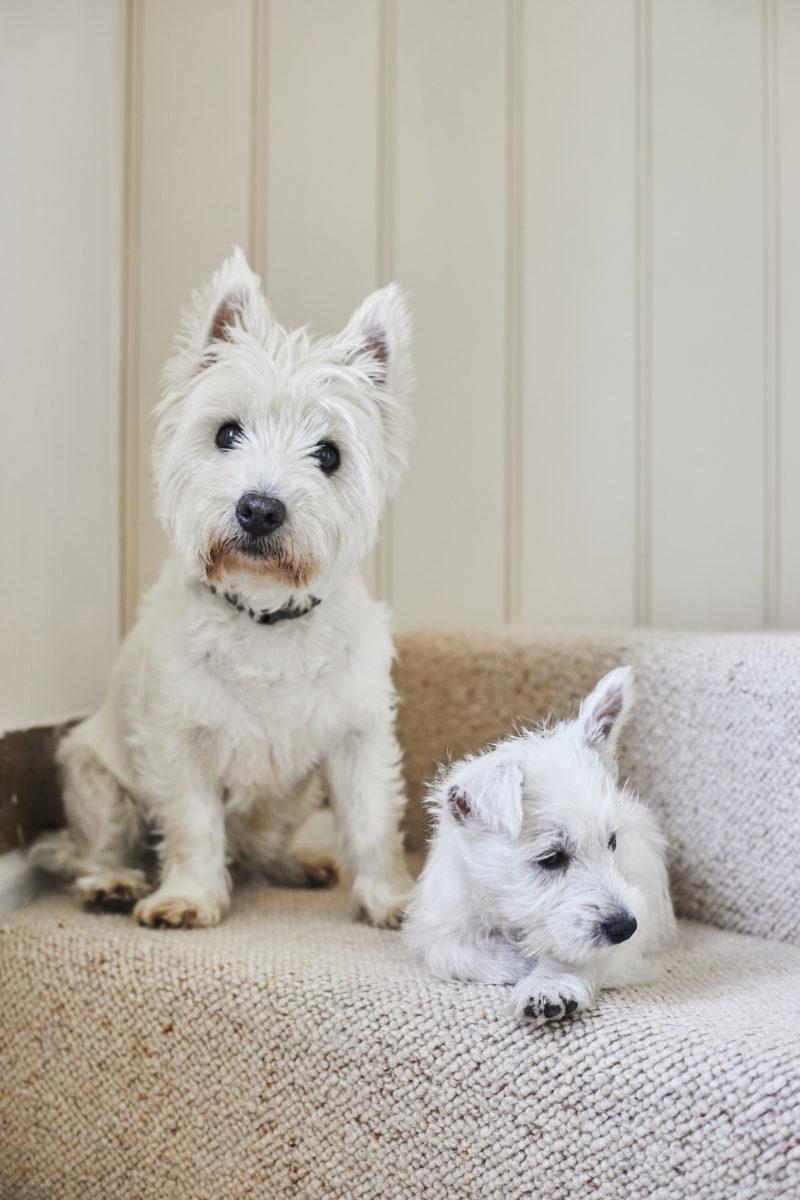 Puppy Roux 4